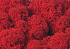 """Стабілізований мох """"Ягель"""" червоний 1кг"""