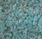 """Стабілізований мох """"Ягель"""" блакитний 20г, фото 1"""