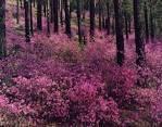 Багульник болотный -лекарственная трава (40гр)