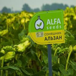 Семена подсолнечника Альзан (стандарт)