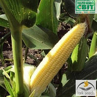 Семена сахарной кукурузы Добрыня F1, 25.000 семян. Ранняя, суперсладкая — №1 в Украине