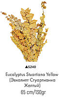 Стабилизированный эвкалипт стуартианна желтый