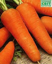 Семена моркови Шантане (Clause) 0,5 кг - среднепоздняя сортовая (110-120 дней), тип Шантане, фото 3
