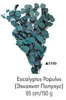Эвкалипт Populus, стабилизированный