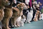 Международная выставка собак «Кубок Харькова - 2017»