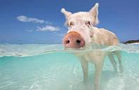 Купить премикс 2.5% откорм для свиней, Германия,тм Gepard  gepardd.com
