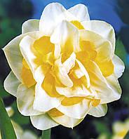 Луковичные растения Нарцисс махровый White Lion