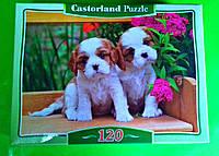 Пазлы Castorland 120 элементов Собачки В-12633