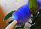 Метелка для уборки пыли Roto Daster (Рото Дастер), фото 5