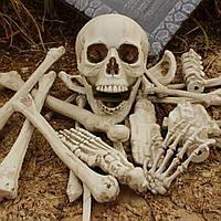 Набор костей человека, пластик