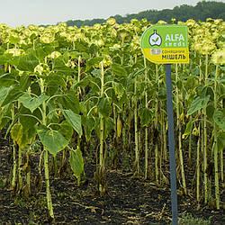 Семена подсолнечника Мишель new (стандарт)