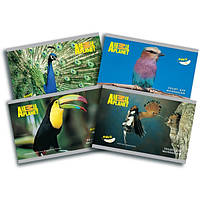 Альбом 24 листа Kite Animal Planet 242, на скобе, ламинация
