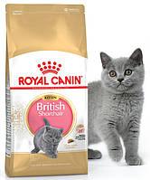 Корм для котят породы Британская короткошерстная Royal Canin British Shorthair Kitten