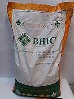 Семена под Гранстар Сонячний Настрий, Заказать ранний гибрид под гербицид Экспресс. Экстра