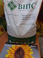 Семена Матадор под гербицид Экспресс, Подсолнечник устойчив к шести расам заразихи, Масличный подсолнечник.