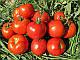 Семена томата Имран F1 / Imran F1 500 семян Enza Zaden, фото 2