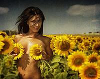 Бонд (Грандстароустойчевые семена Подсолнечника, соняшника)
