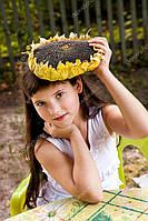 Рембо (Грандстароустойчевые семена Подсолнечника, соняшника)