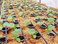 Капельное орошение - особенности применения при реконструкции действующих оросительных систем