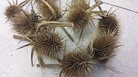 Шишки ворсянки натуральные, 10 шт, 30, фото 1