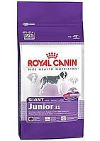 Royal Canin (Роял Канин) Сухой корм для щенков крупных пород Giant junior 15кг (от 8-24 мес)