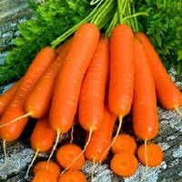 Морковь столовая Ланге Роте Штумпфе 5 г (ЗИППЕР)