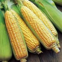 Кукуруза Брусника 10 г (Зиппер)