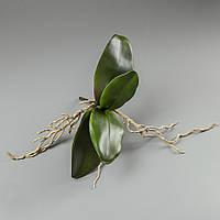 Листья орхидеи (27 см)