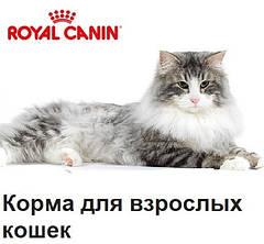 Для взрослых кошек всех пород