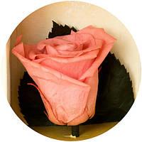 "Долгосвежая роза ""Розовый Жемчуг"" 5 карат на коротком стебле"