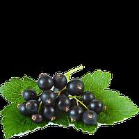 TPA Black Currant (Черная Смородина)