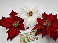 Рождественник (Пуансетия) 1397