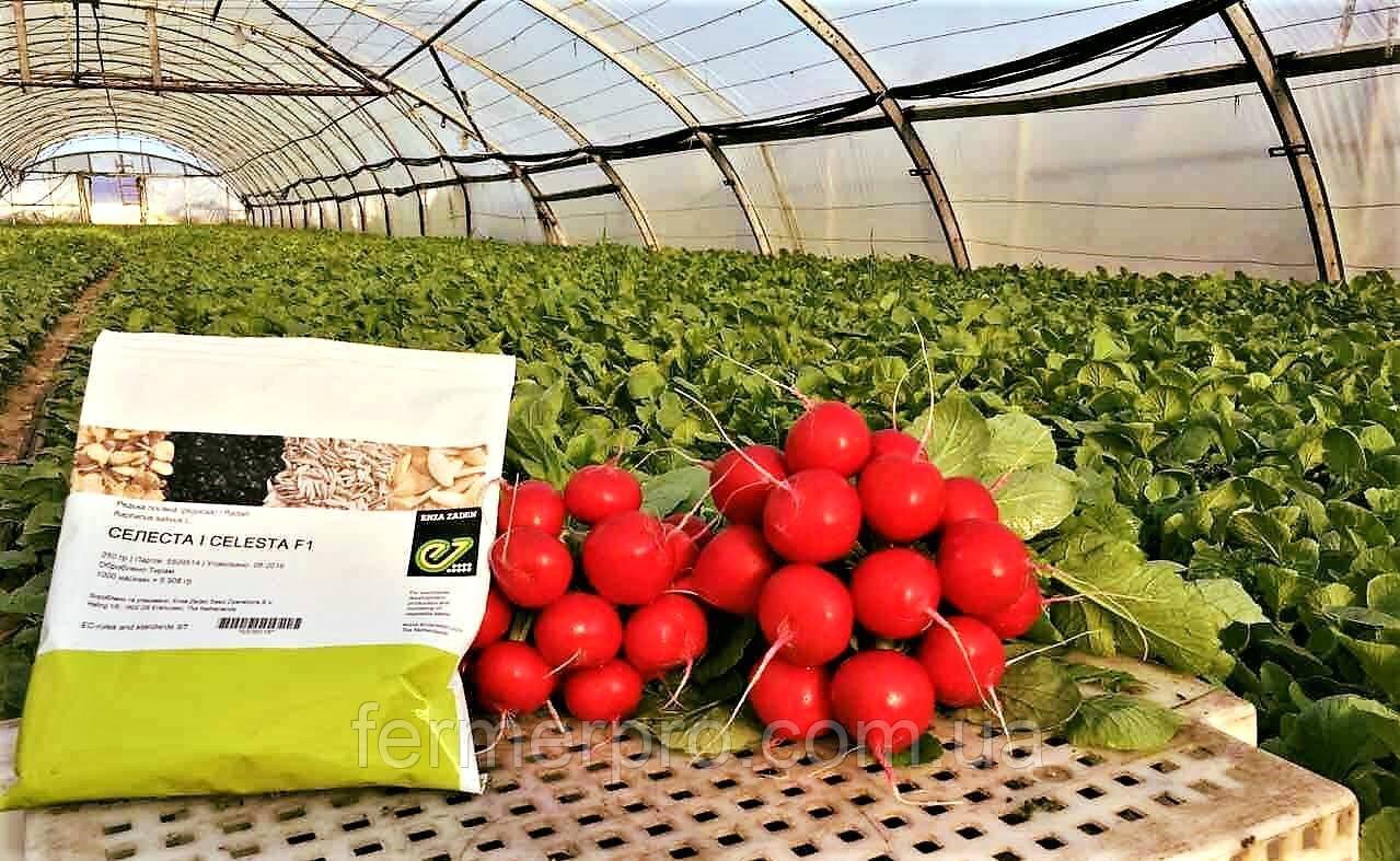 Семена редиса Селеста F1 \ Celesta F1 50.000 семян фракция 2.75-3.0 Enza Zaden