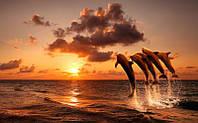 Фотообои Дельфины на закате