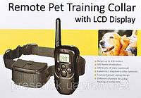 Электронный ошейник Axsel Fox PT-100 Обучающий электрошейник для собак на батарейках