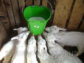 Овцы, козы