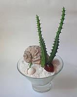 Подарунок-декор із живих рослин