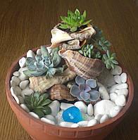Каскад із сукулентів - подарунок і декор із живих рослин