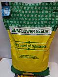 Семена подсолнечника под Гранстар НЕО, Урожайный гибрид, Подсолнечник устойчив к шести расам заразихи, фото 2