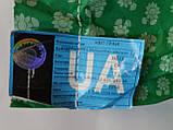 Семена подсолнечника под Гранстар НЕО, Урожайный гибрид, Подсолнечник устойчив к шести расам заразихи, фото 5