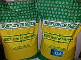 Купить семена подсолнечника под Гранстар НЕО, Гибрид Выдерживает шесть рас заразихи A-F, Высокоурожайный. , фото 4