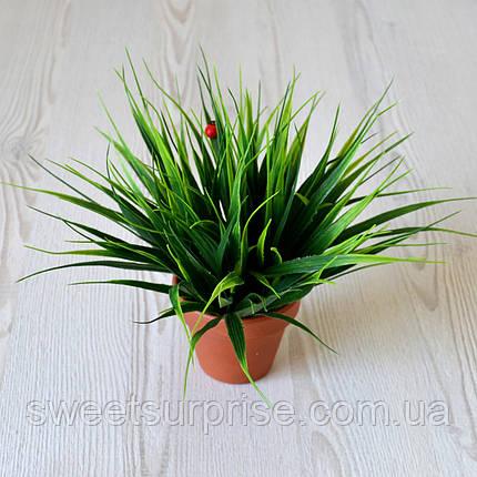 Декоративная трава в горшке для офиса, фото 2