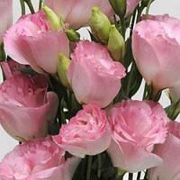 Семена Эустома АВС F1 Розовый Туман Misty Pink 50 семян Pan-american seeds, фото 1