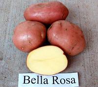 Беллароза, семенной картофель 5 кг