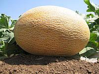 АМАЛ  F1 / AMAL F1 - Дыня, Clause, 5000 семян