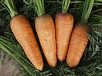 БОЛТЕКС / BOLTEX - морковь, Clause 0,5 кг семян
