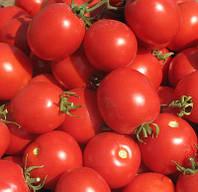 СОЛЕРОССО F1 / SOLEROSSO F1 - томат детерминантный, Nunhems 25 000 драже