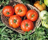 ПОЛБИГ F1 / POLBIG F1 - томат детерминантный, Bejo 5 грамм семян
