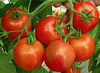 РИЧИ F1 / RITCHY F1 - томат детерминантный, Bejo 5 грамм семян