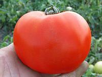 КАСТА (СУПЕРНОВА) F1 / KASTA (SUPERNOVA) F1 - томат детерминантный, Clause 5000 семян